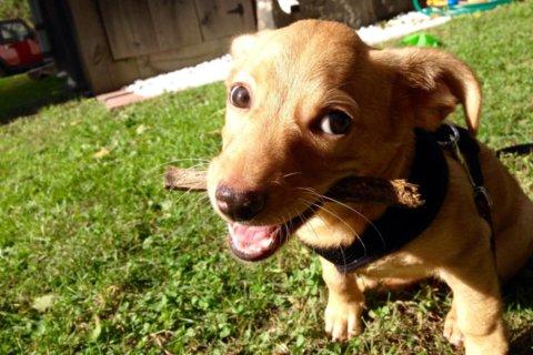 A shelter dog love story for #AdoptAShelterDogMonth