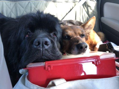 Dog road trip